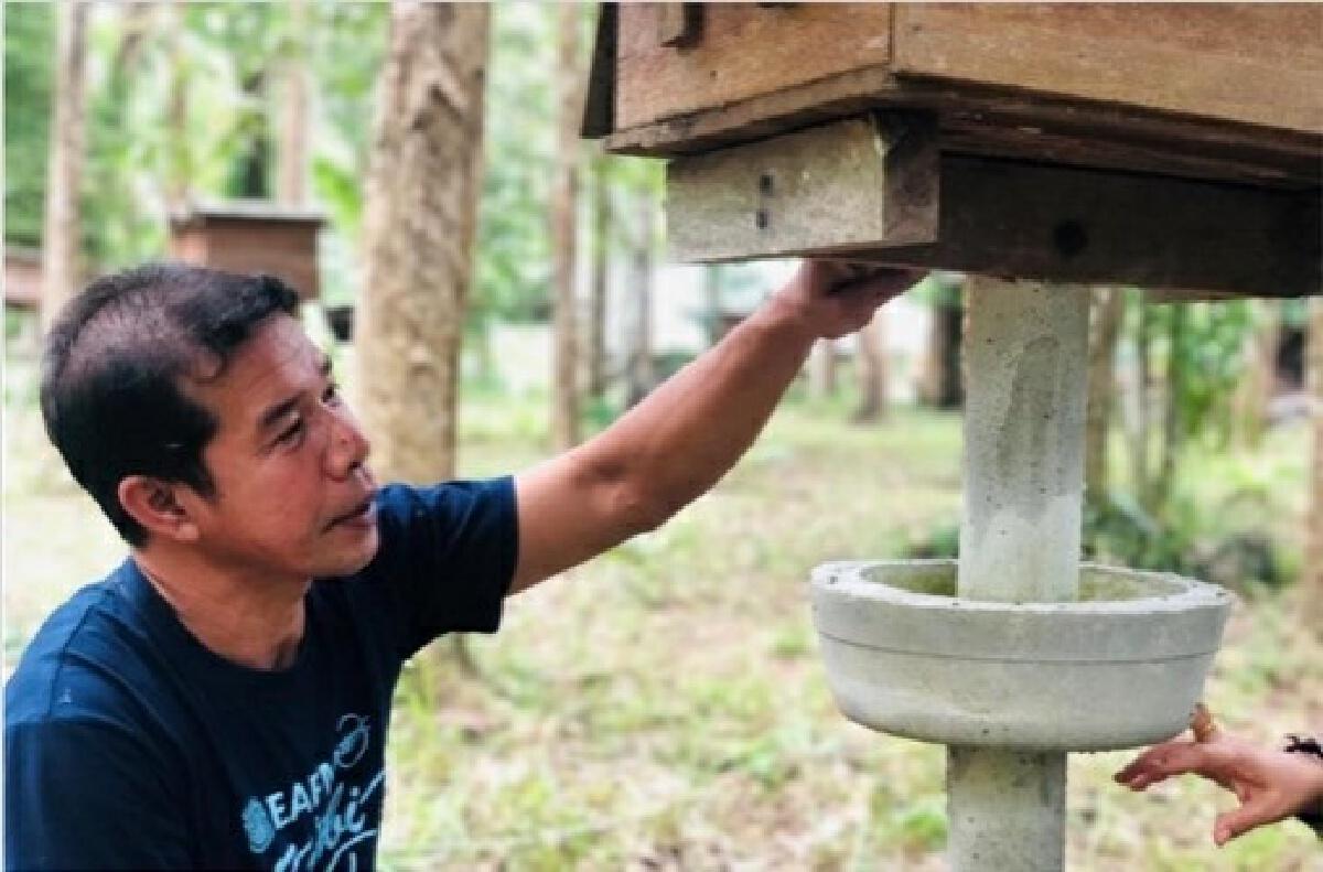 """""""น้ำผึ้งเดือนห้า""""จากป่าชายเลน สุดยอดผลิตภัณฑ์แปลงใหญ่""""ผึ้งบ้านไหนหนัง"""" กระบี่"""