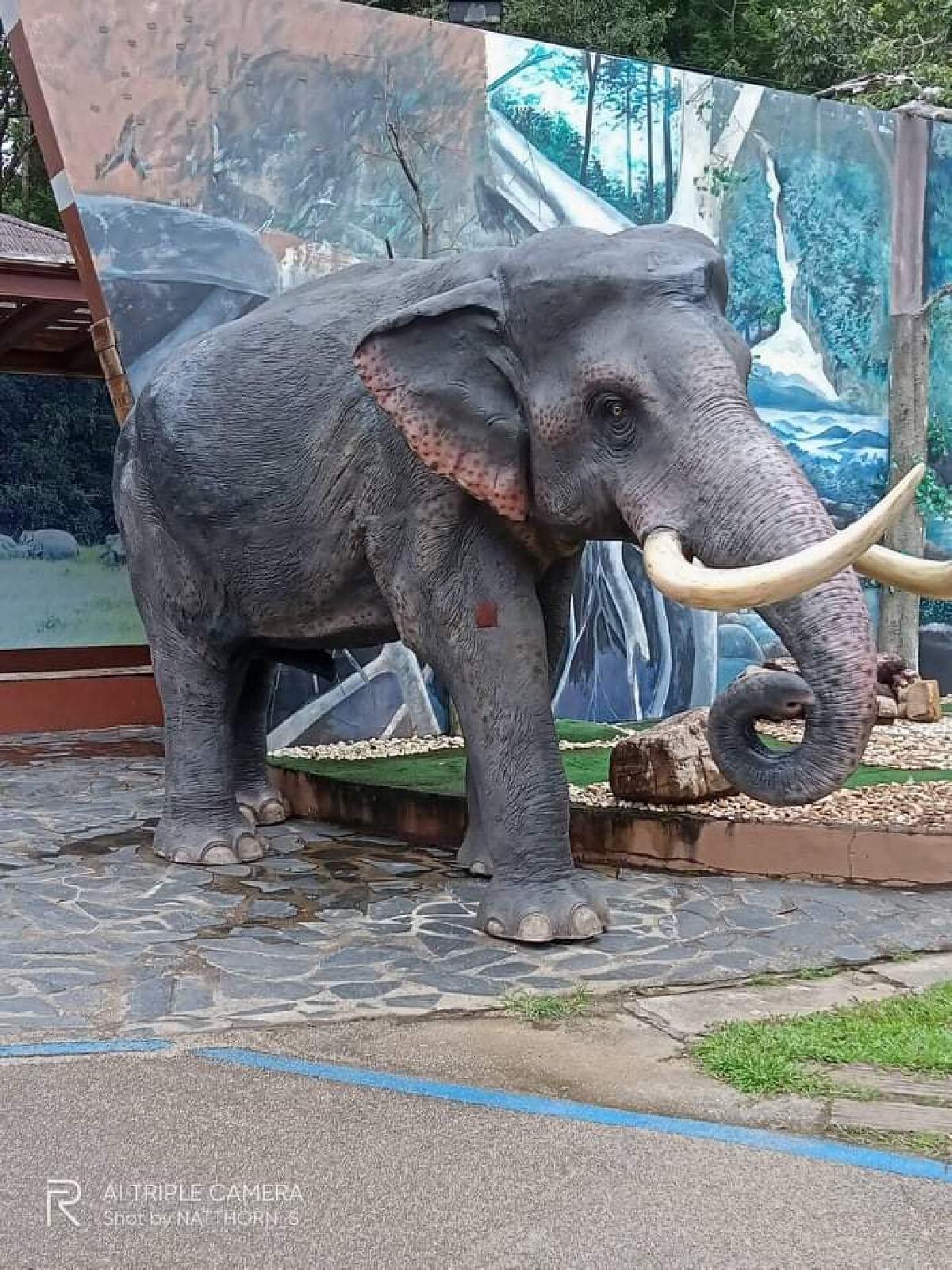 """""""พลายนิ่ง"""" กลับมาแล้ว หลังถูก พลายเดียว ช้างป่าเขาใหญ่ ชนล้มจนงาหัก-ตัวแตก"""