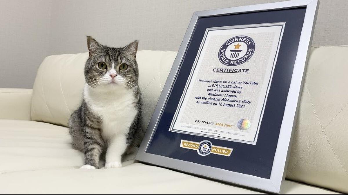 """""""โมจิมารุ"""" แมวแฟนคลับเยอะจนได้โล่ทองคำยูทูปและสถิติกินเนสส์บุ๊ค"""