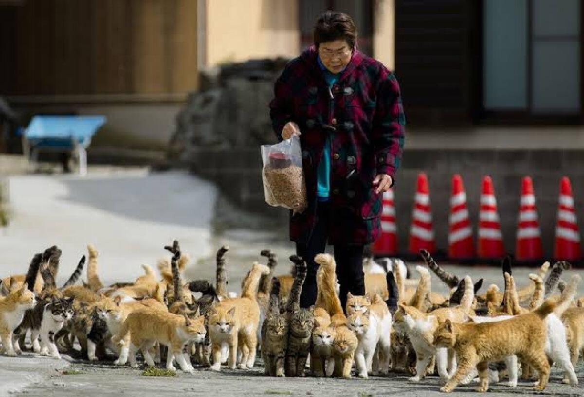"""เกาะนี้แมวคุม """"เกาะน้องเหมียว"""" ที่ประเทศญี่ปุ่น"""