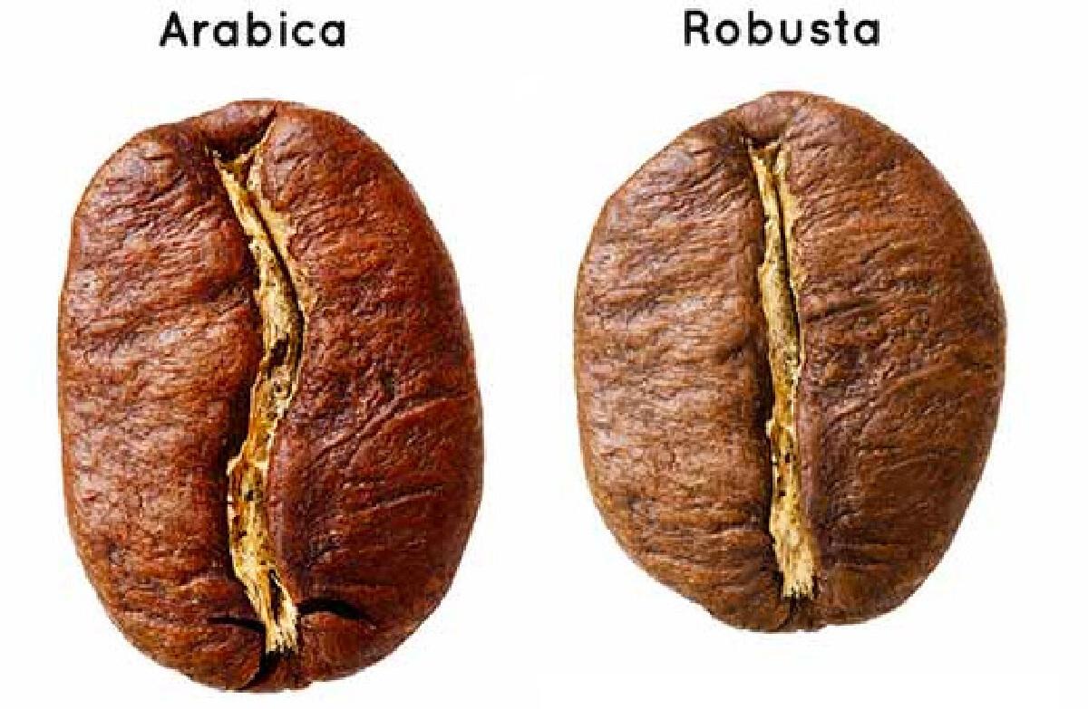 """""""กาแฟโรบัสต้า"""" กับ """"กาแฟอาราบิก้า"""" ต่างกันอย่างไร"""