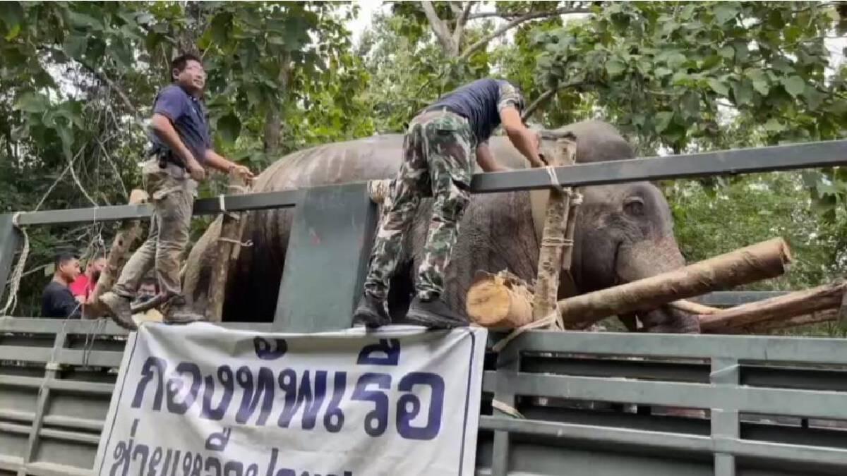"""งานช้างของจริง ขนคนนับร้อยย้าย """"ช้างป่า"""" หลังหากินรุกที่ชาวบ้าน"""