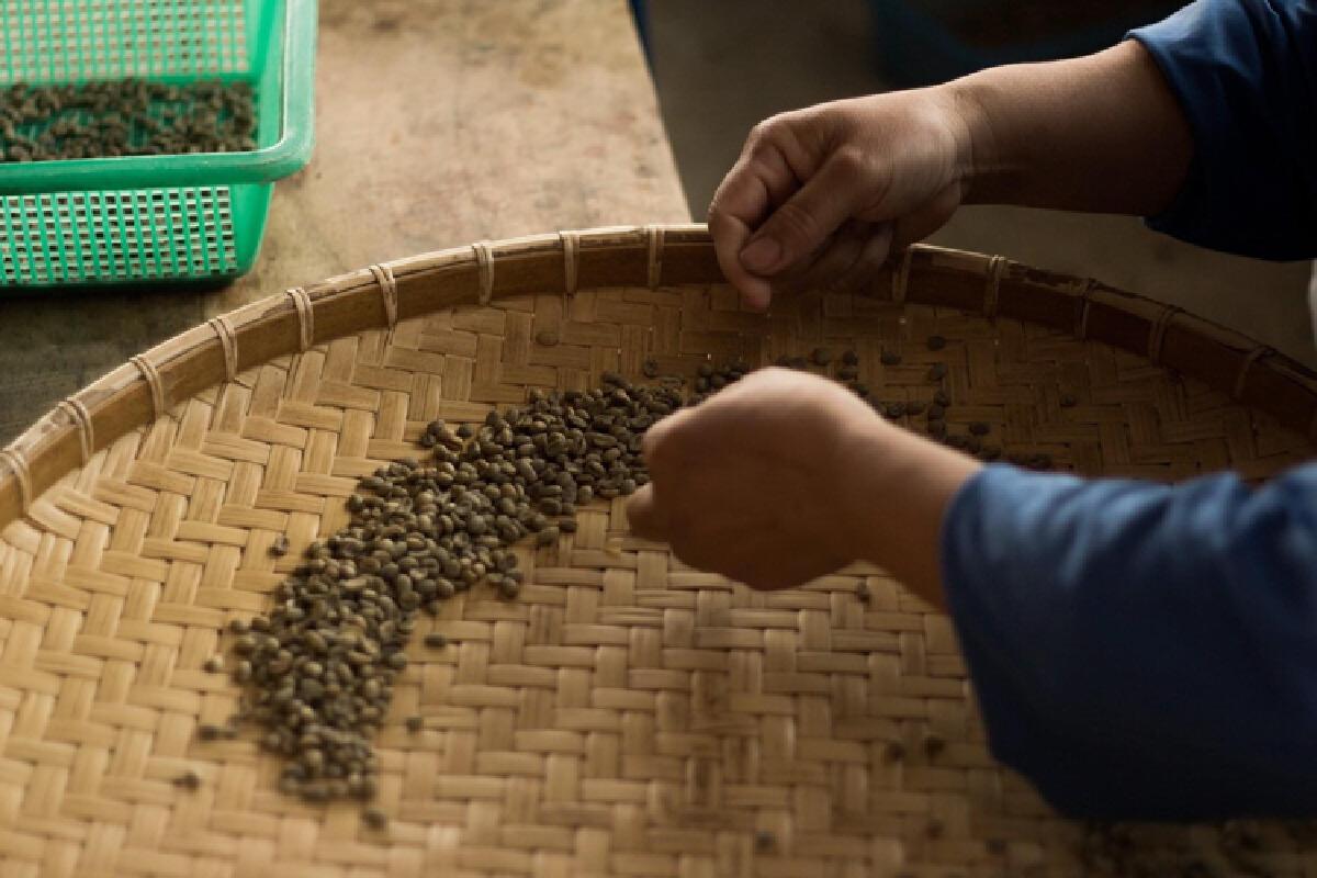 """คาเฟ่ที่ต่อท้ายว่า """"Specialty Coffee"""" ต่างจากคาเฟ่ทั่วไปอย่างไร"""